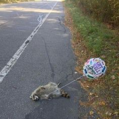 Get Well Soon, my dear dead raccoon.  I swear, I did not mean to rhyme that!  :D