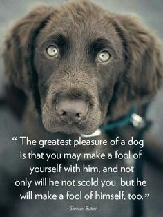 """The greatest pleasure of a dog is that you may make a fool of yourself with him, and not only will he not scold you, but he will make a fool of himself too."""