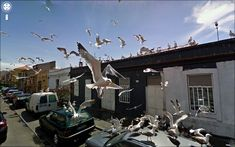 Google street view offers terrific moments. Loads of birds are scary: Hitchkok's set?