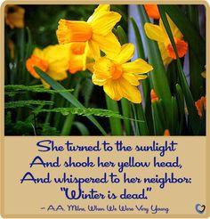 Daffodils are a delightful sign of spring.  #caregiving #eldercare #homecare