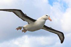 Mit mondanak rólad az inka papok? Válaszd ki, melyik madár vagy, olvasd el a jellemzésedet!      A fékezhetetlen (I.22. – II.19.) A napmadár jegyében született ember legfőbb tulajdonsága a függetlensége. Nem kerüli ugyan feltétlenül mások társaságát, de nagyon jól érzi magát egyedül is. Sokan közülük nem...