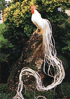 """Onagadori means, roughly translated, """"Honourable Fowl"""" (also long tailed fowl) and is a phenomena of animal breeding. A combination of genes, but one in particular called """"nm,"""" causes the extravagantly long growth of the tail feathers. An Onagadori's key trademark is the non-molting tail feathers that, if kept in the best of conditions with high levels of animal husbandry, grow for the life of the roosters."""