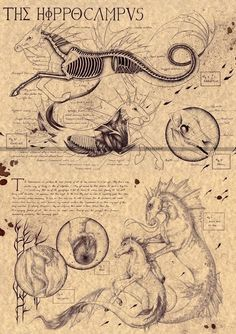 Harry Potter Creatures, Legends And Myths, Sketches, Mythical Monsters, Mythical, Art, Mythology, Fantastic Beasts, Mythical Creatures Art