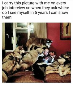 "5,190 Likes, 68 Comments - Siberian Husky (@officialhuskylovers) on Instagram: ""#huskies #huskylove #cute #officialhuskylovers #dogs"""