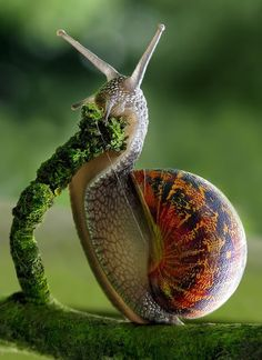 God has so much creativity going on that he even puts art on slugs