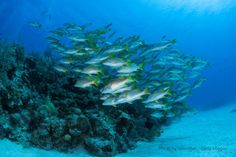 Have the Best Day Ever by Scuba Diving in the Cayman Islands | The Residences Seven Mile Beach