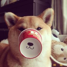 shiba inu with special smile Animals And Pets, Funny Animals, Cute Animals, Shiba Inu, Akita, I Love Dogs, Puppy Love, Hachiko, Japanese Dogs