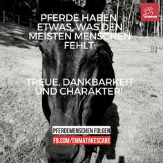 Besuche uns www. Equestrian Problems, Horse Quotes, Script Type, Keep Calm And Love, Show Jumping, Wisdom Quotes, Dangerous Sports, Horseback Riding, Gemini