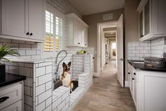 Max doesn't mind getting a bath, especially in his new Vista Dorado Plan 3 dog…