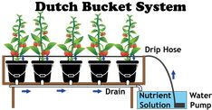 The Dutch Bucket Hydroponic System - NoSoilSolutions