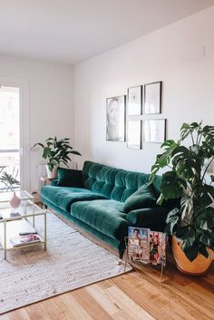 Green velvet sofa & plants