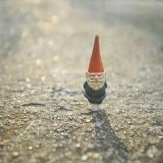 a traveling gnome
