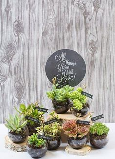 18 DIY Party Favors For Adults. Love these sweet succulent party favors! Suculentas Diy, Cactus Y Suculentas, Unique Wedding Favors, Wedding Party Favors, Trendy Wedding, Party Favours, Wedding Parties, Wedding Gifts, Wedding Reception