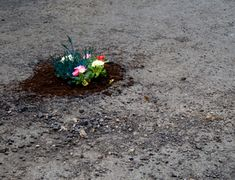 Pothole Gardens: ..and flowers in unexpected places..