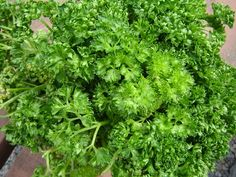 Petržel kadeřavá Korn, Parsley, Herbs, Diet, Herb, Medicinal Plants