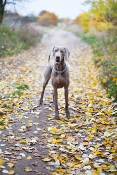 If you want a great place to buy dog accessories like dog beds, dog bowls, kennels, collars, harnesses and even dog clothing and dog food then just visit the site.