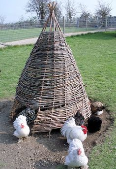 Chicken Tipi | Cool DIY Projects & Homesteading How-To's | Pioneer Settler | Best DIY Projects for the Homestead at pioneersettler.com