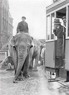 Elephants Elephants (of a circus) walking over a street in Berlin next to a tram - 1931