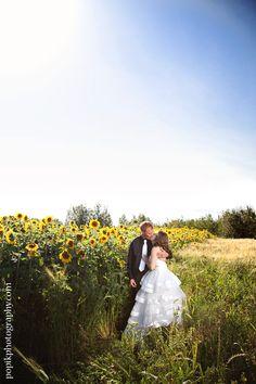 Bride & Groom in a field of sunflowers