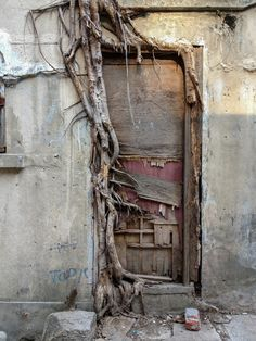 Tree roots are vast and intricate systems. These photos prove tree roots can put up a good fight against concrete. Cool Doors, Unique Doors, The Doors, Windows And Doors, Entry Doors, Entrance, Panel Doors, When One Door Closes, Door Gate