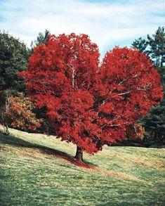 How Beautiful, Beautiful Places, Road Trip, Destinations, Destination Voyage, Rocky Mountain National Park, Garden Trees, Covered Bridges, Autumn Trees