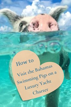 Get ready for a trip full of action-packed adventure - on a luxury yacht charter in The Bahamas! Paradise Island, Island Life, Travel Plan, Travel List, Travel Guides, Bahamas Resorts, Travel Images, Travel Pictures, Swimming Pigs