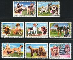 Romania 1990- International Dog Show - Romania commemorated the 1990 International Dog Show, hosted by Brno, Czechoslovakia. The stamps feature the following dogs: German Shepherd, English Setter, Boxer, Beagle, Doberman Pinscher, Great Dane, Afghan Hound, and Yorkshire Terrier.