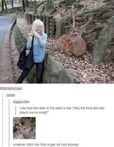 If I was a deer