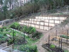 """Our kitchen garden covers a small flat area and a rather steep embankment behind it. We terraced the slope and created the raised beds for the rotations. On top of the embankment we planted 15 blueberries from a number of varieties in a long raised bed.  We use a crop rotation system in the majority of the beds. In the extra beds we plant seven year beans and over-wintering vegetables and all those plants that don't really fit the rotation cycle."""