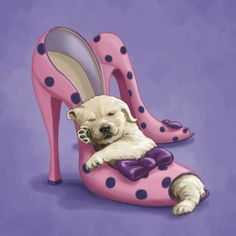 Marcello Corti - cute dog in girly shoes.jpg