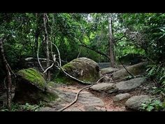 Ecuadors Lost City of Giants Discovered [FULL VIDEO 2015]