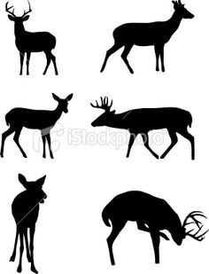 Shadow on whitetail deer clip art