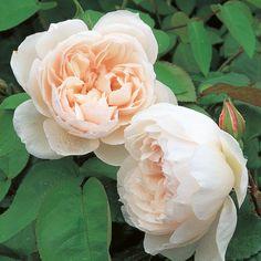 The Generous Gardener | rosenpark-draeger.de  120+