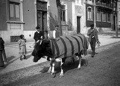 Lisboa de Antigamente: Profissões de antanho: leiteiro Antique Photos, Vintage Photos, Old Pictures, Old Photos, Algarve, Capital City, Good Old, Lisbon, Portuguese