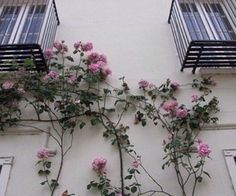 """This is """"Tenhamos Paz - mensagem de Emmanuel"""" by FEEAK Minas . Estudos Espíritas on Vimeo, the home for high quality videos and the people who love… Plants Are Friends, Pretty Flowers, Land Scape, Flower Power, Planting Flowers, Bloom, Exterior, Outdoor Structures, Nature"""