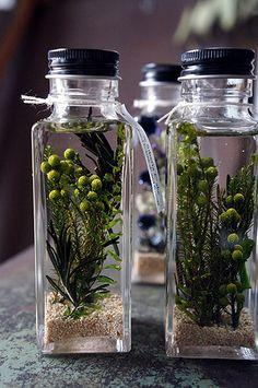 シベリアケヱキのこんな一日の画像 エキサイトブログ (blog) Garden Terrarium, Glass Garden, Homemade Essential Oils, Flower Bottle, Diy Bottle, How To Preserve Flowers, Healing Herbs, Paint Colors For Home, Arte Floral
