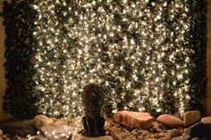 Image result for christmas twinkle