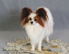 Papillion - this is what my boy Leo looked like. Miss him.