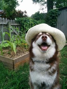 62856f2105d This is farmer dog