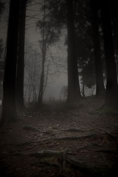 An eerie forest in Germany