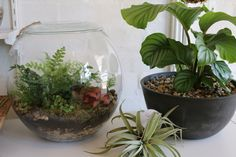 Terrariums Melbourne Little LandsLookbook — Little Lands