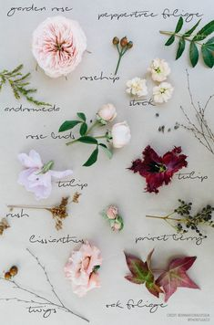 Amazing Flowers, Colorful Flowers, Beautiful Flowers, Ikebana, Floral Bouquets, Bridal Bouquets, Flower Meanings, Flower Names, Spring Wedding Flowers