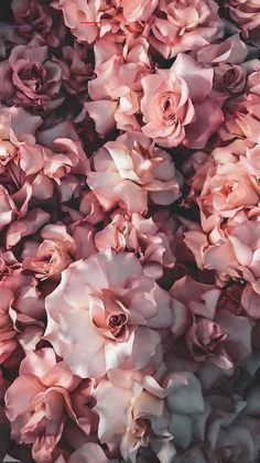 pretty pink flowers #flowers #prettyflorals Flor Iphone Wallpaper, Iphone Background Wallpaper, Aesthetic Iphone Wallpaper, Nature Wallpaper, Aesthetic Wallpapers, Iphone Backgrounds, Flowers Background Iphone, White Roses Background, White Wallpaper For Iphone