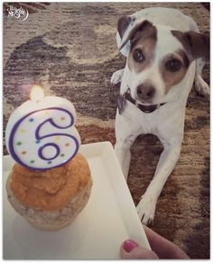 This Throwback Thursday is throwing it back to April, when it was my sweet Clem's 6th birthday. Yes, I am one of those crazy dog moms who has parties for their dogs, even when no one else is invited.  My husband is resigned to the fact that this will happen.  (As a side note, when we had just starte