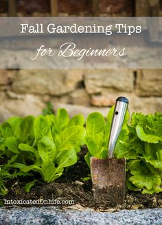 Fall Gardening Tips for Beginners from IntoxicatedOnLife.com - Didn't get a garden in this spring? Give a fall garden a try!