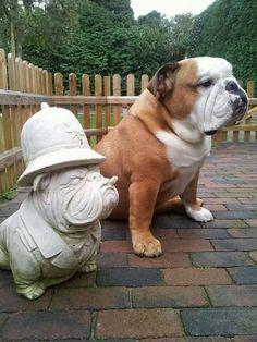 ❤ Like twins ❤ Posted on English Bulldog News on Facebook
