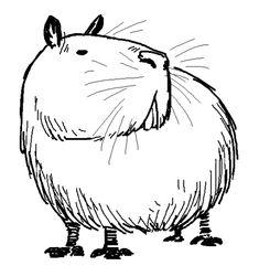 Animal Paintings, Animal Drawings, Art Drawings, Moth Drawing, Line Drawing, Capybara, Desenho Tattoo, Illustration Sketches, Fauna