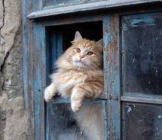 Hi Kitty!