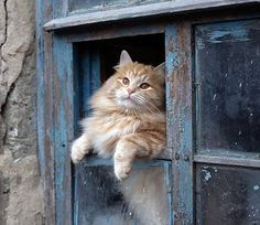 Cat In Window - Click for More...
