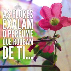 Flores de Trevo de 4 Folhas... Sorte na Vida!!!